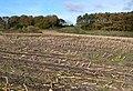 Field of maize stubble near Coppermine Lane - geograph.org.uk - 1561715.jpg