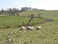 Fields near Little Bavington - geograph.org.uk - 1267715.jpg