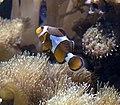 Fish (5730543250).jpg