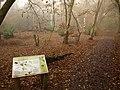 Fishpond Wood - geograph.org.uk - 2172513.jpg