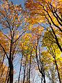 Flickr - Nicholas T - Hogback Ridge Park (1).jpg
