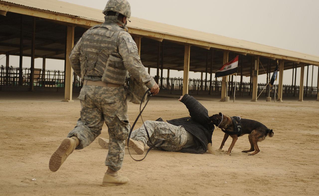 Image Result For Team Dog Training