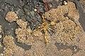 Flinders-Blowhole-20070221-022.jpg