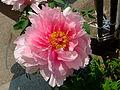 Flower-center133244.jpg
