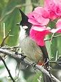 Flower Lover (5472509970).jpg