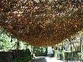 Flower canopy ,yercaud tamilnadu - panoramio.jpg