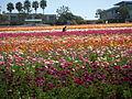 Flower feld 20.jpg