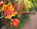 Flowers (230).jpg