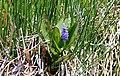 Flowers 3 (6908519982).jpg