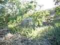 Foel Isaf - A Derelict Farmhouse - geograph.org.uk - 241032.jpg