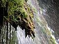 Fontaine des Tufs (Les Planches-près-Arbois) (11).jpg