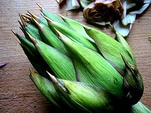 Closeup of green artichoke thistle.