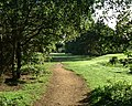 Footpath across Rushmere Common - geograph.org.uk - 811619.jpg