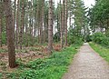 Footpath through Ambion Wood - geograph.org.uk - 918503.jpg