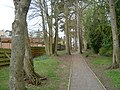 Footpath under pine trees - geograph.org.uk - 1242439.jpg