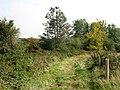 Forêt de Tournehem - panoramio - Jean Marc Gfp (5).jpg