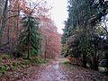 Forêt domaniale de La Petite-Pierre Sud (1).jpg