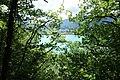 Forest @ Roc de Chère @ Talloires (34836763783).jpg