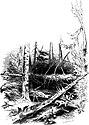 Forest Hymn pg 55b.jpg