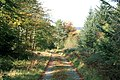 Forest Path - geograph.org.uk - 591225.jpg