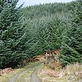 Forest fence - geograph.org.uk - 702324.jpg