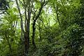 Forest in Mt.Tsukiore 04.jpg