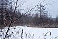 Forest near Olgino in December 2020-12-15-1.jpg