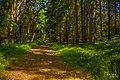 Forest path, Fjärdlång, Stockholm (Sweden) - panoramio.jpg