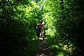 Forest walk (4757352192).jpg