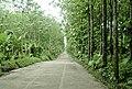 Forestales en Tabasco - panoramio.jpg