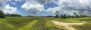 Fort Mose Historic State Park - A panorama of the hammocks and salt marsh at the site of Fort Mose.