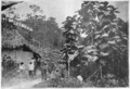 Fotg cocoa d086 labourers cottage on cacao estate in trinidad.png
