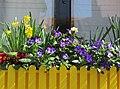 Frühlingsblumen - panoramio (1).jpg