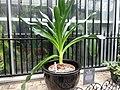 Frightful Flora - US Botanic Gardens 13.jpg