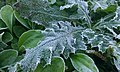 Frozen Dew - panoramio.jpg