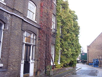 Fuller's Brewery - The wisteria plant at the Griffin brewery 2008