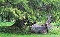 Fulpmes Stubaital - panoramio (31).jpg