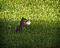 Furry Gourmet (4997375572).jpg