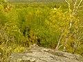G. Novouralsk, Sverdlovskaya oblast', Russia - panoramio (173).jpg