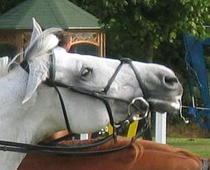 "Gag bit - The ""gag snaffle,"" used with two reins, showing the sliding cheekpieces."