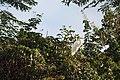 Garça-branca-grande vigilante.jpg