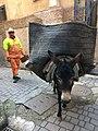 Garbage Donkey.jpg