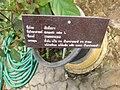 Gardenology.org-IMG 8010 qsbg11mar.jpg