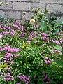 Gardens in Baghdad 50.jpg