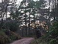 Gated entrance to Firmounth path in December - geograph.org.uk - 632464.jpg