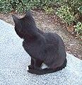 Gato callejero en Madrid 07.jpg