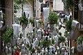 Girona Flores 3 (137251961).jpeg