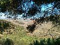 Gouves, Greece - panoramio (11).jpg