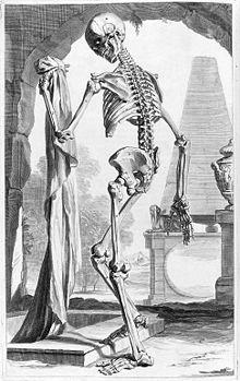 Eine der Bildtafeln in Ontleding des menschlyken lichaams (Quelle: Wikimedia)