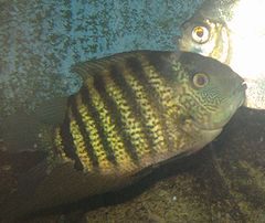 Green Severum.jpg